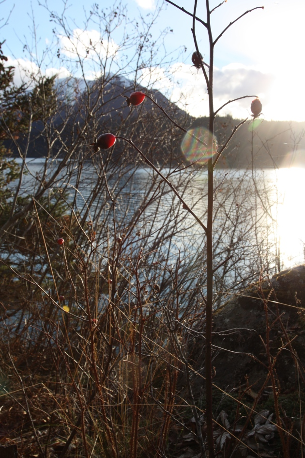 Rosehips and a view.